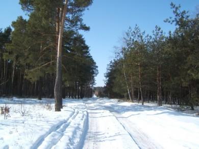 Лісовий масив поблизу села Вовківка