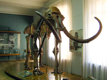 Скелет мамонта у Полтавському краєзнавчому музеї. Фото