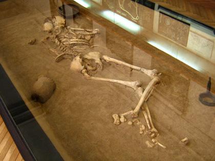 Скелет — поховання скіфського часу. Фото