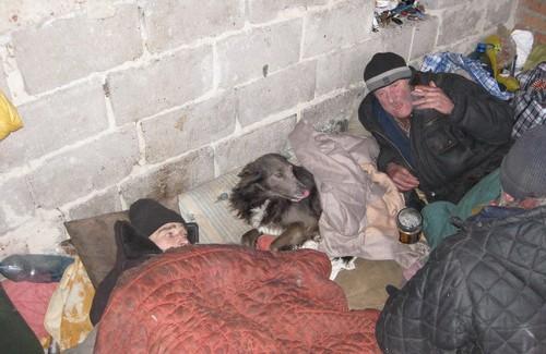 Собака охраняет «пещеру» и помагает согреваться