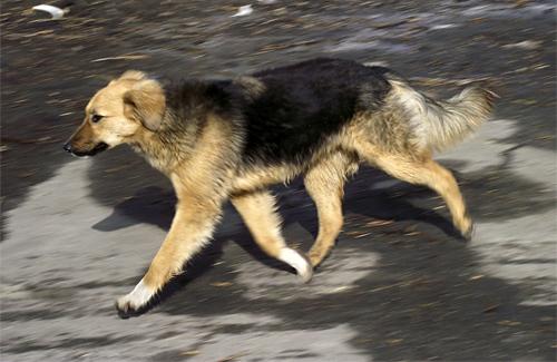 В Полтаве продолжают убивать собак