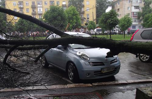 Ветки немного повредили автомобиль «Nissan Micra»