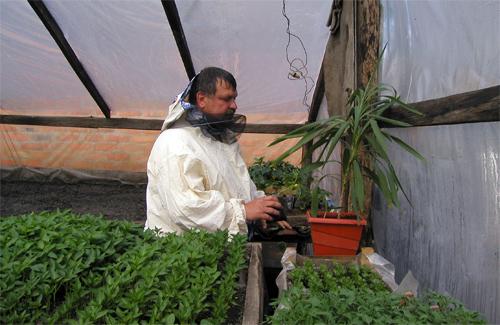 В області пропонують збільшити кількість площ для вирощування овочів у теплицях