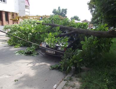 В Полтаве упавшие деревья повредили автомобили и перекрыли улицу