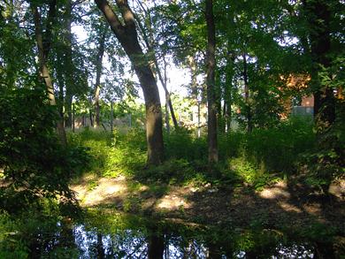 Екологічний стан селища в багато чому залежить від столітніх дубів. Адже саме вони утримують болотистий ґрунт від розмиву.