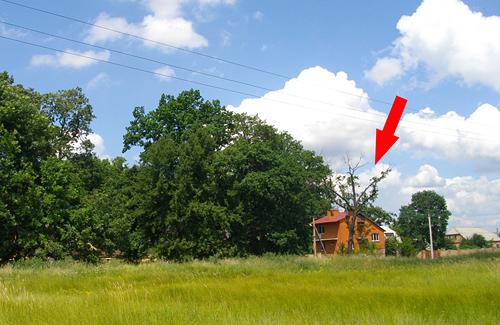 Мешканці селища, не на камеру, говорять, мовби дерева труять свідомо, щоб дуби засихали