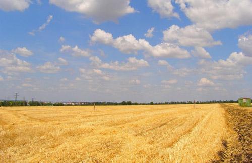 Полтавщина — серед лідерів за кількістю намолоченого зерна