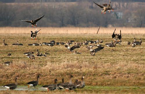 На Полтавщині сезон полювання почнеться 13 серпня