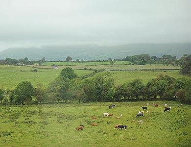 Изумрудные луга Ирландии
