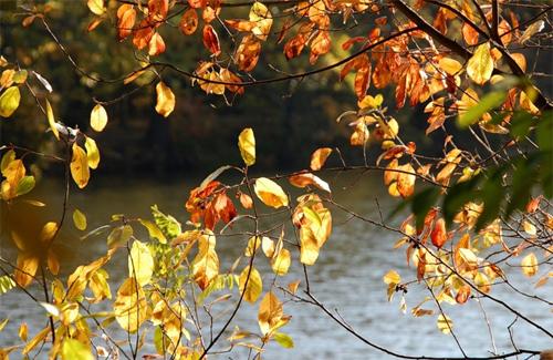 Прохолодний вітер нагадує нам про те, що бабине літо скоро закінчиться