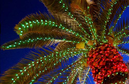 У пальмы встречают новый год