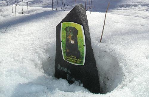 У Полтаві відсутні спеціальні кладовища для тварин