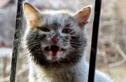 Кременчугских кошек и собак перепишут, поставят на учёт и выдадут им паспорта