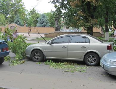 В Полтаве на машину упало дерево (фотофакт) / Новости Полтавы: http://poltava.to/news/16938/