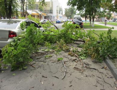 В Полтаве на машину упало дерево (фотофакт) / Новости Полтавы: http://poltava.pl.ua/news/16938