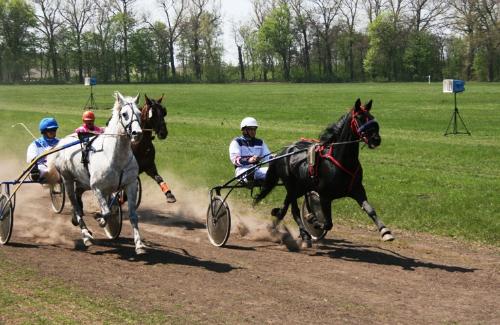 перегони в Дібрівці