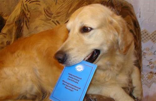 Домашнім тваринам видаватимуть спеціальні паспорти