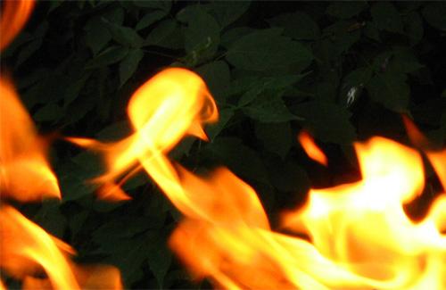 Пожары уничтожают траву, леса и крыши строений