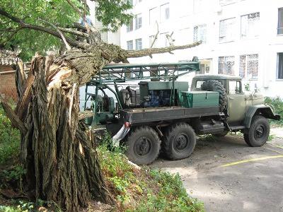 У Полтаві трухлява акація пошкодила 3 автомобілі