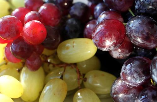 Время собирать виноград!