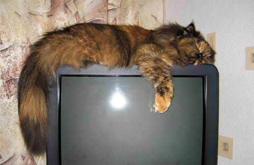 До «податку на телебачення» полтавці не готові