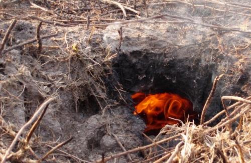 На Полтавщине вновь горят торфяники