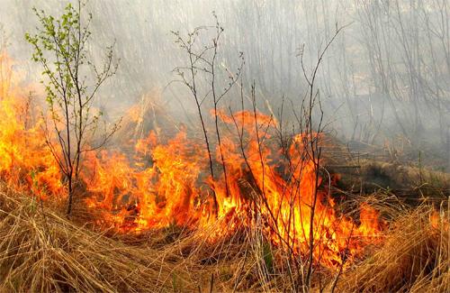 На Полтавщине горит сено урожая 2010 года