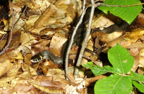 Под Полтавой змея укусила грибника