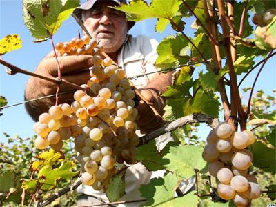 Месяц сбора винограда