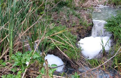 Половчанські ставки знову потерпають від каналізаційних стоків