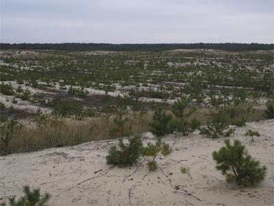 Захисне лісовідновлення