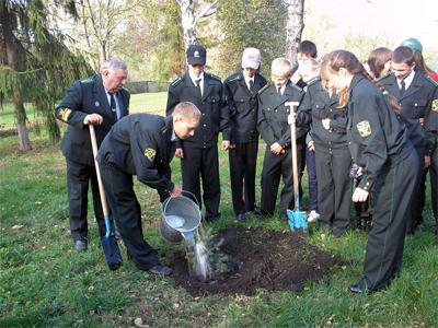 Юні лісівники продемонстрували свої уміння, посадивши декоративні ялини