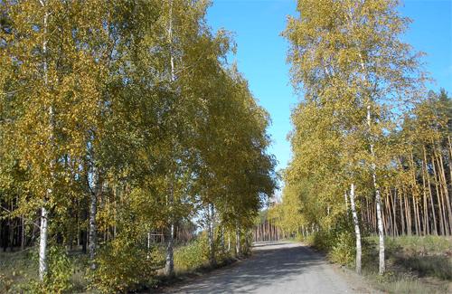 Ліси Полтавщини