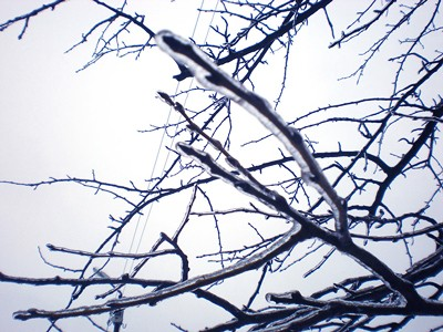 Обледеневшие ветки деревьев