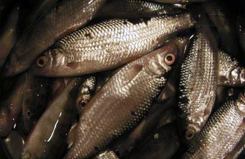 80 кг риби — такий улов двох полтавських браконьєрів