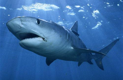 Полтавские турагентства комментируют нападения акул в Египте