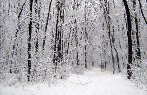 Самый холодный день в истории Полтавщины