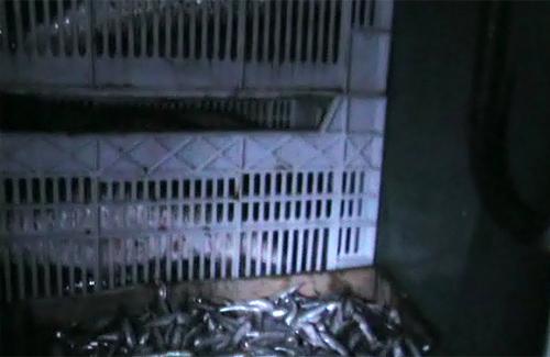 Сотрудники ГАИ конфисковали тонну рыбы