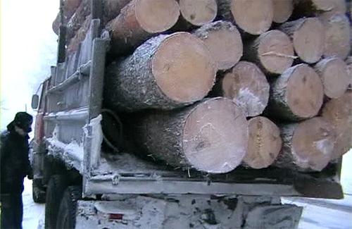 ДАІ затримала вантажівку з «лівою» деревиною