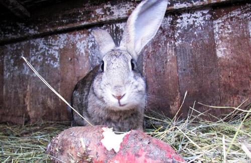 2011 - год Кролика