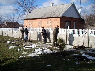 У Нових Санжарах саджали сосни в лютому