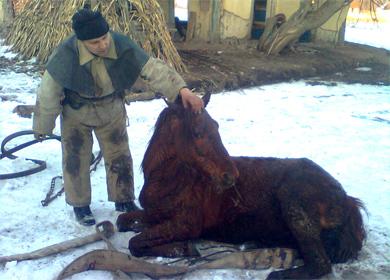 МНСники витягли з колодязя коня