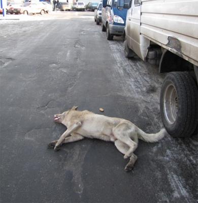 На центральном продовольственном рынке отравили собак