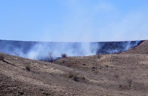 Масові підпали сухої трави вбивають флору та фауну Полтавщини