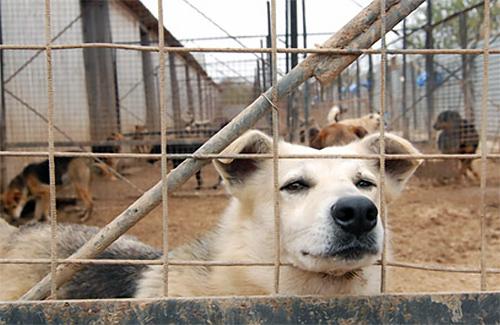 Вольер для бездомных собак