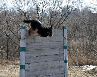 На Полтавщині до Євро-2012 готують службових собак