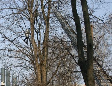 Сегодня МЧСники пытались снять с дерева молодую женщину