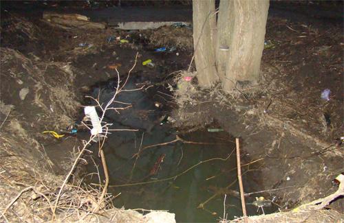 Гадяцький район: екологічна проблема знищує Хітці