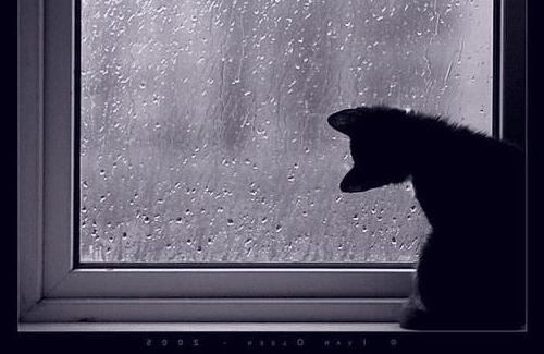 «И теперь у меня впереди — дожди, дожди, дожди»