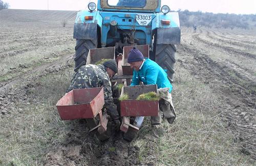 Весняна посадка лісів на Полтавщині завершена